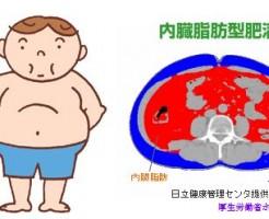 倹約遺伝子は内蔵脂肪を増やす