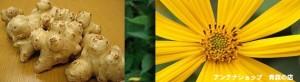 菊芋の効果