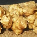 菊芋の糖尿病に対する効果とは