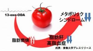 トマトはメタボリックシンドロームを予防