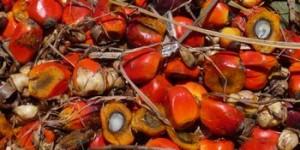 パーム油の原料