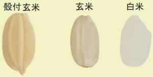 玄米は糖尿病に良い成分が多い