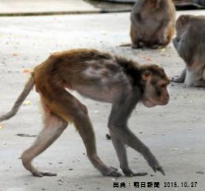 猿の糖尿病猿の原因はメタボ