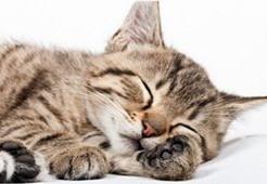 60分以上の昼寝は糖尿病のリスクを上げ糖尿病になりやすい