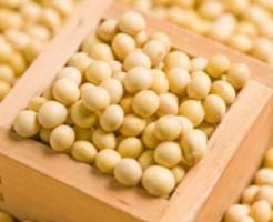 大豆は糖尿病や肥満女性に良い