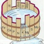 糖尿病のドベネックの桶ではビタミンA不足