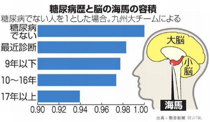 糖尿病では脳が萎縮することが認知症の原因です