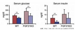 大豆コングリシニンは肥満解消や糖尿病に良い