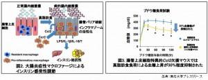 慶応大学によって肥満と糖尿病の関係が明らかになりました
