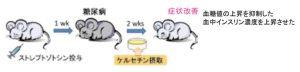 ケルセチンはマウスの実験で糖尿病を改善