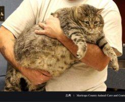 肥満の犬猫は糖尿病のリスクが高い